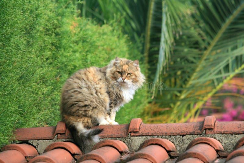 Gatto che si siede su un tetto immagine stock
