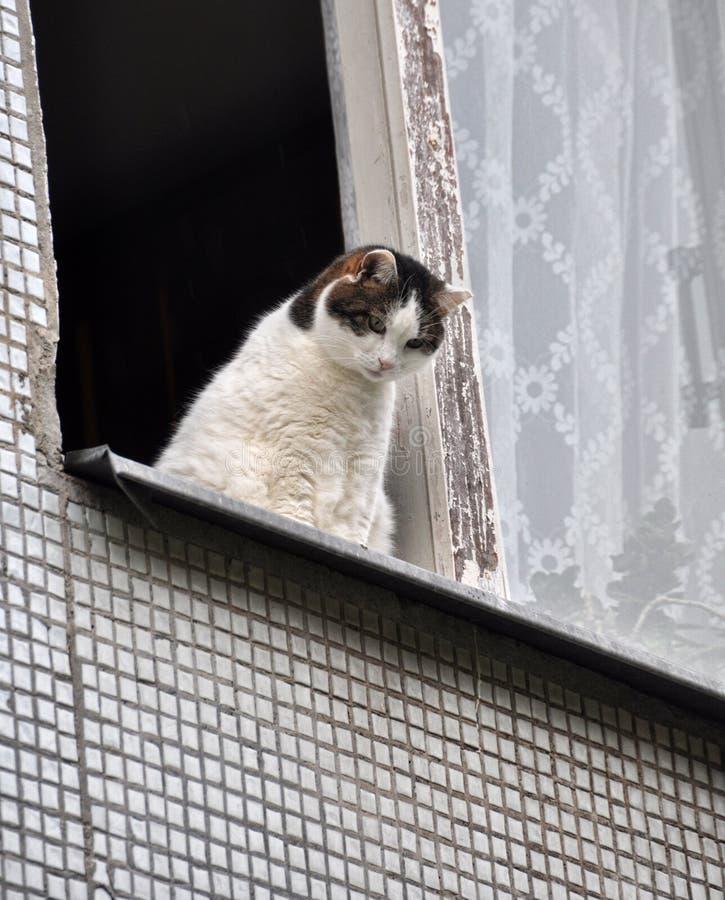 Gatto che si siede sul davanzale della finestra immagine - Finestra che si apre ...