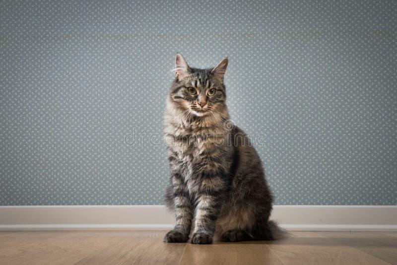 Gatto che si siede sul pavimento fotografia stock libera da diritti