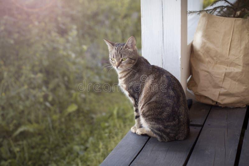 Gatto che si siede sul portico fotografia stock