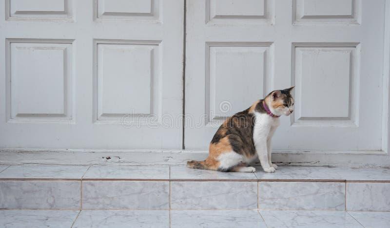 Gatto che si siede sulla parte anteriore di pietra di punti della porta fotografie stock