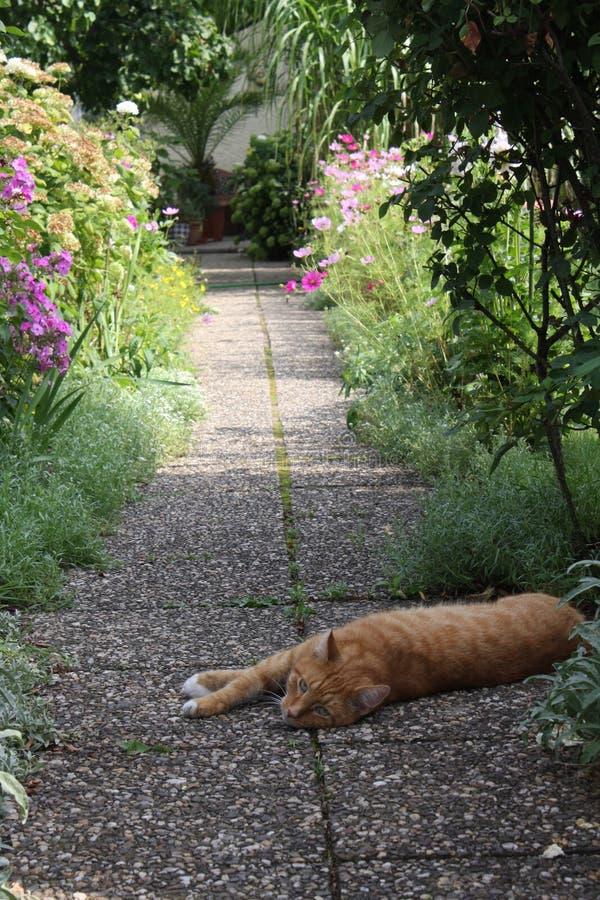 Gatto che si trova nel giardino fotografia stock