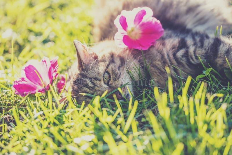 Gatto che si trova sull'erba nel giardino fotografia stock libera da diritti