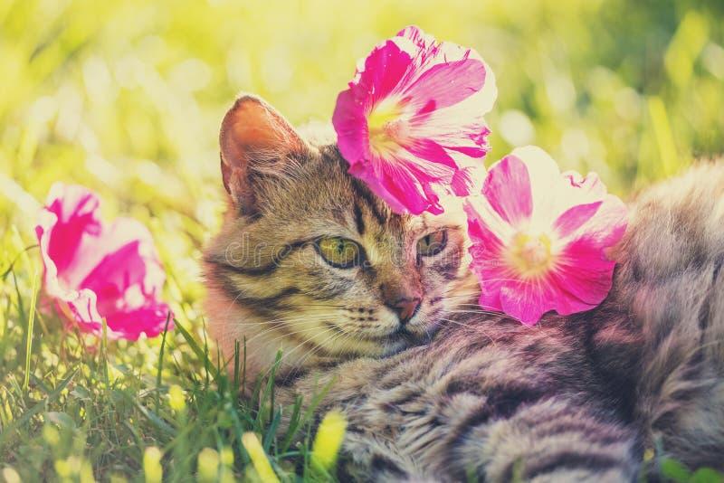 Gatto che si trova sull'erba nel giardino fotografie stock
