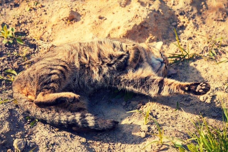 Gatto che si trova sulla sabbia sulla strada non asfaltata fotografia stock libera da diritti