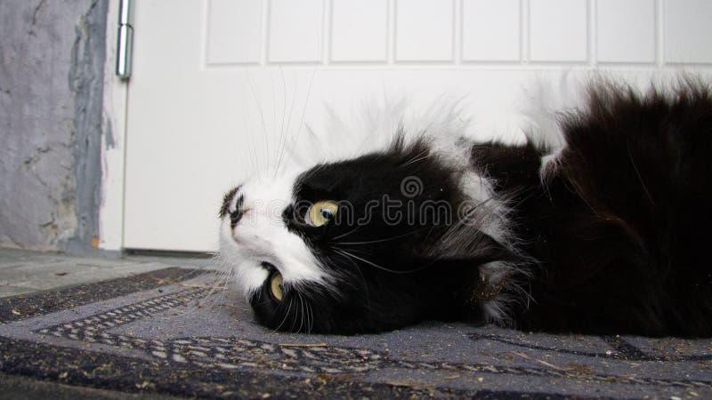 Gatto che si trova sulla stuoia benvenuta immagini stock libere da diritti