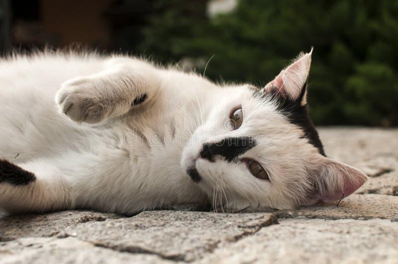 Gatto che si trova sulla superficie pavimentata del giardino immagini stock libere da diritti