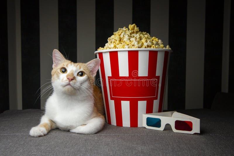 Gatto che si trova sullo strato con popcorn e la televisione di sorveglianza, sta riposando nella sera nella stanza, spazio della immagini stock libere da diritti