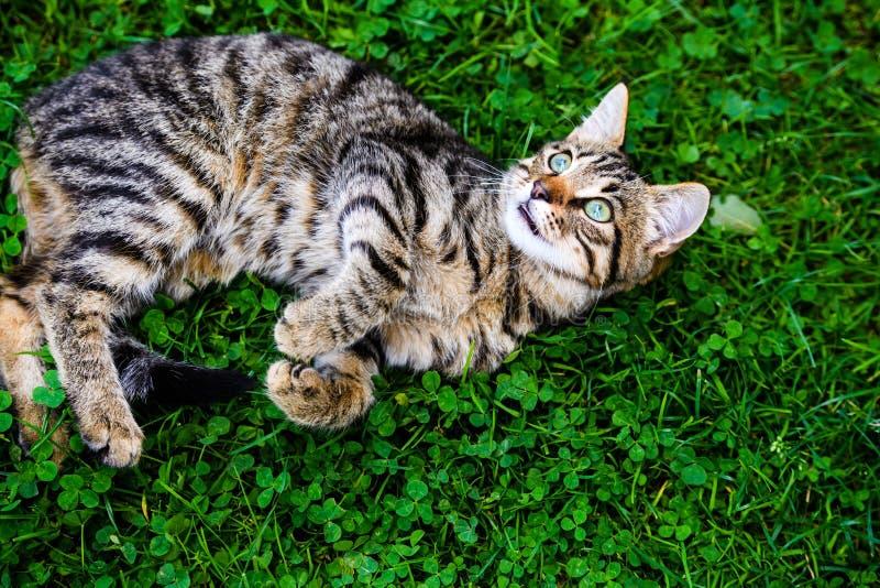 gatto con gli occhi di stupore su erba verde immagine stock