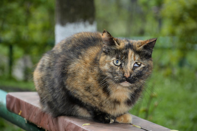 Gatto con gli occhi malati. fotografie stock