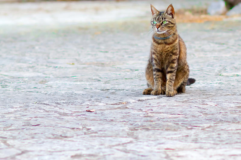 Gatto con gli occhi verdi brillanti che guarda qualcosa prendere il suo fondo del bokeh dello iin di attenzione fotografie stock