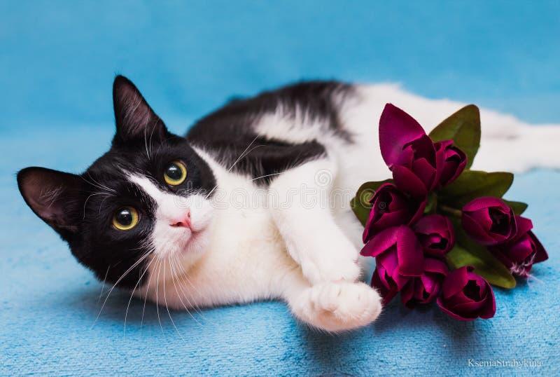 Gatto con i tulipani immagine stock