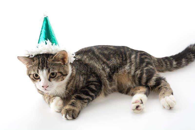 gatto con il cappello del partito fotografia stock libera da diritti
