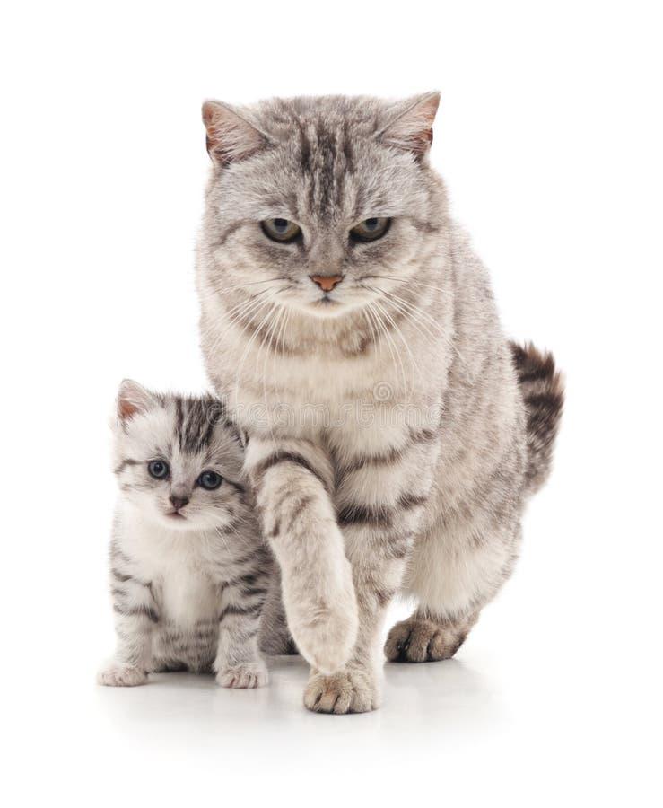 Gatto con il gattino immagini stock libere da diritti