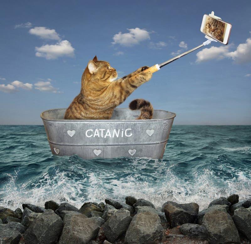 Gatto con il telefono sulla barca 2 immagine stock libera da diritti