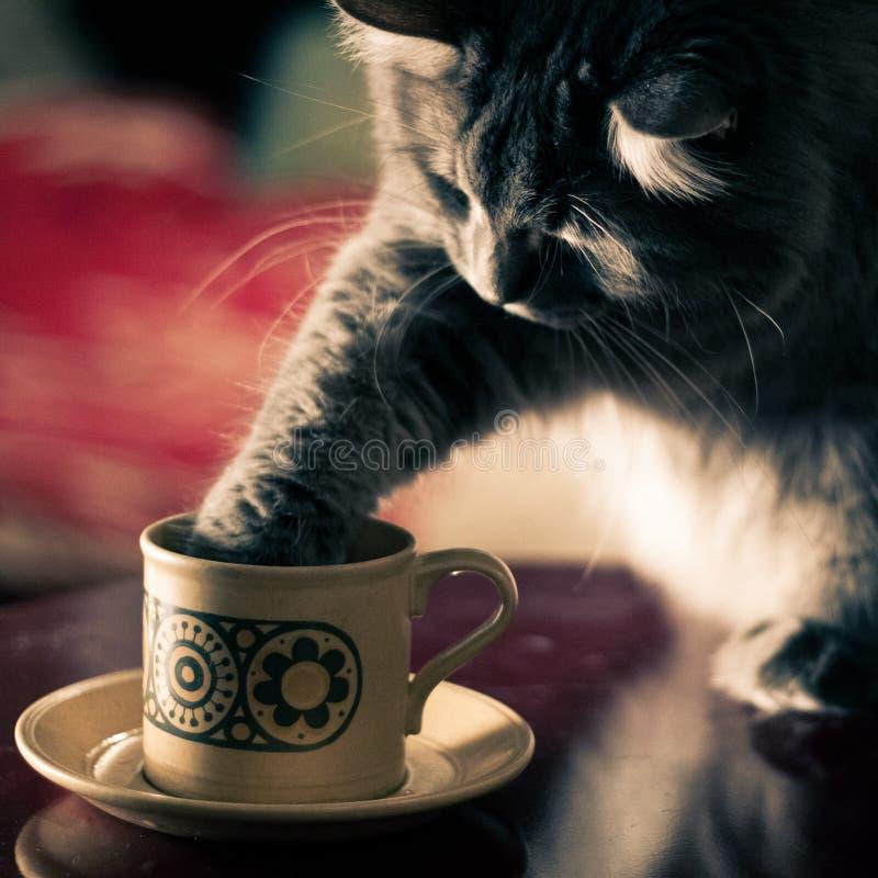 Gatto con la zampa dentro una tazza del tè o del caffè fotografia stock libera da diritti