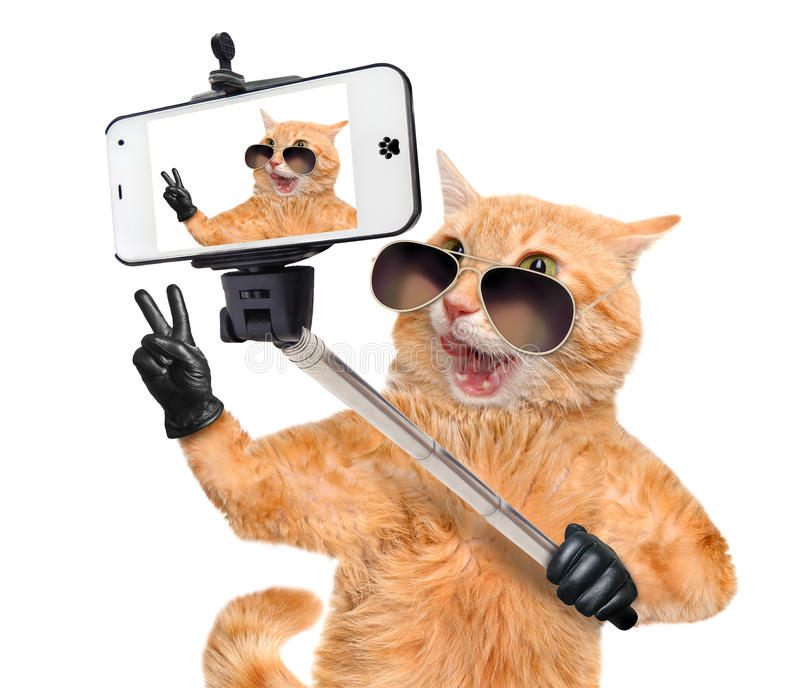 Gatto con le dita di pace in cuoio nero che prende un selfie insieme ad uno smartphone fotografia stock