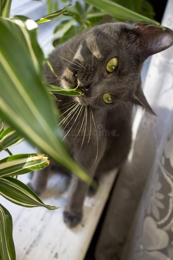 Gatto con le foglie fotografie stock