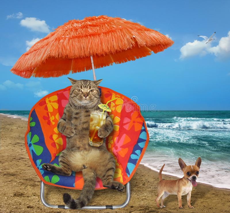 Gatto con succo in una chaise-lounge del sole immagine stock libera da diritti