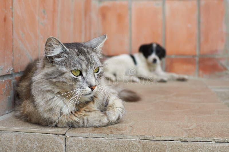 Gatto con un cane immagini stock libere da diritti