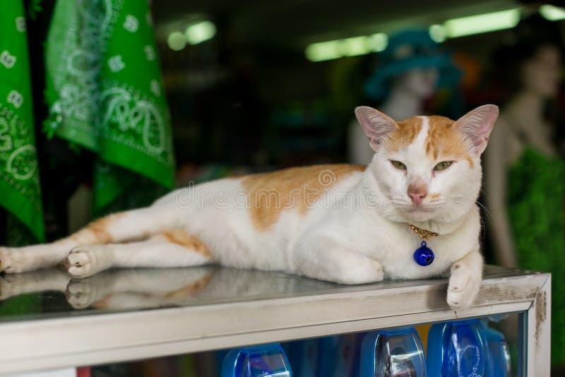 Gatto con un pendente fotografia stock