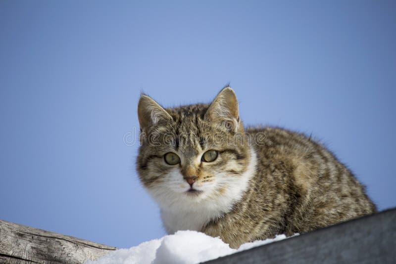 gatto con uno sguardo premuroso contro il cielo sogni senza tetto del gattino del concetto domestico fotografia stock libera da diritti