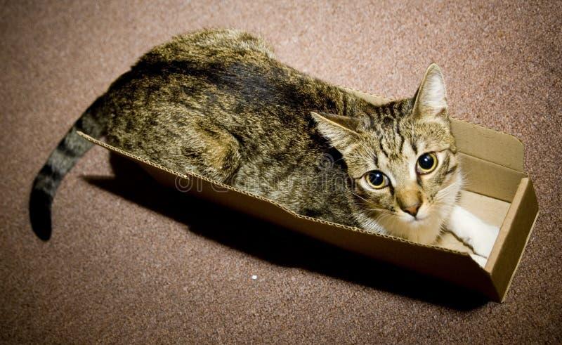 Gatto in contenitore di scatola fotografie stock libere da diritti