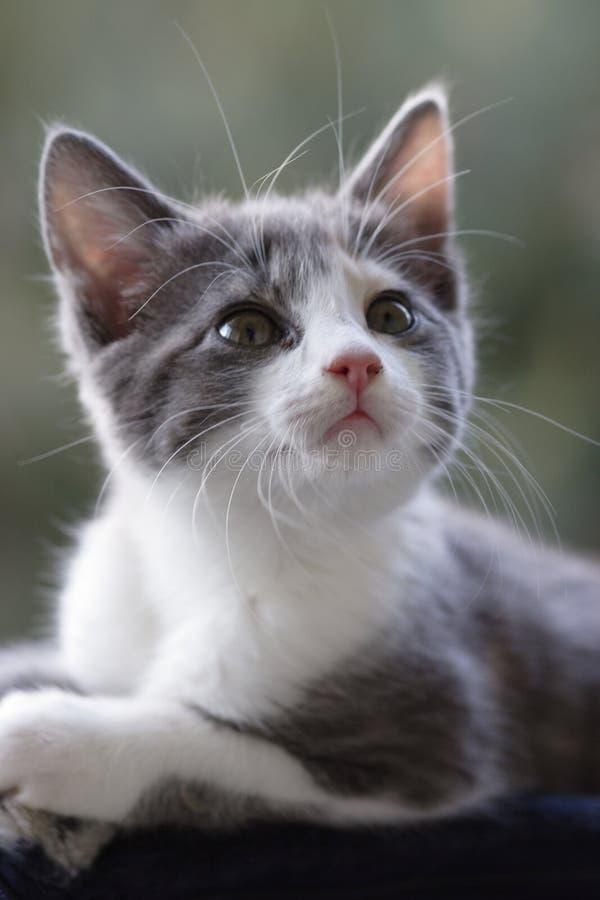 Gatto Curioso Immagini Stock