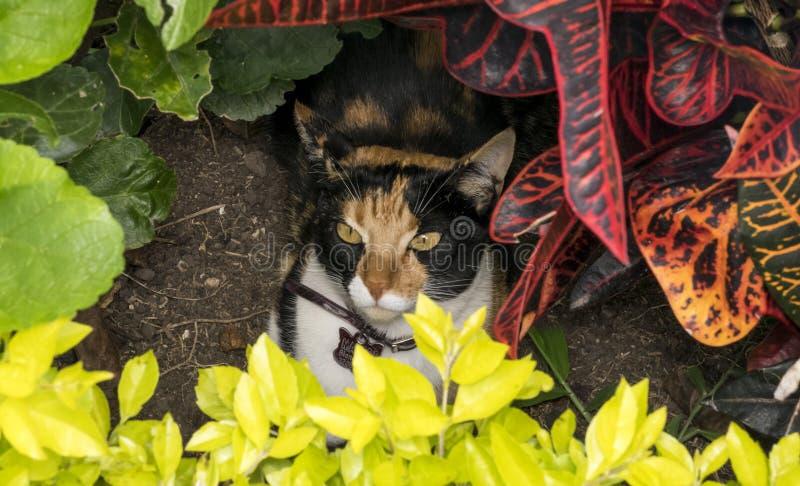 Gatto curioso che si nasconde su un giardino immagini stock