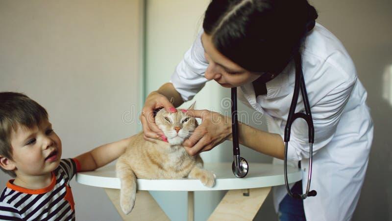 Gatto d'esame della donna veterinaria con il proprietario del ragazzino in ufficio medico fotografia stock libera da diritti