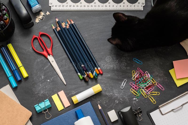 Gatto degli elementi essenziali della scuola del posto di lavoro della casa dello studente immagine stock