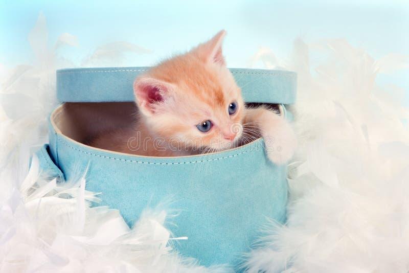 Gatto del bambino in casella immagini stock libere da diritti