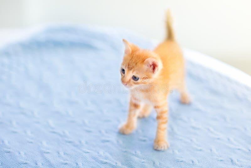 Gatto del bambino Gattino dello zenzero che gioca a casa immagine stock libera da diritti