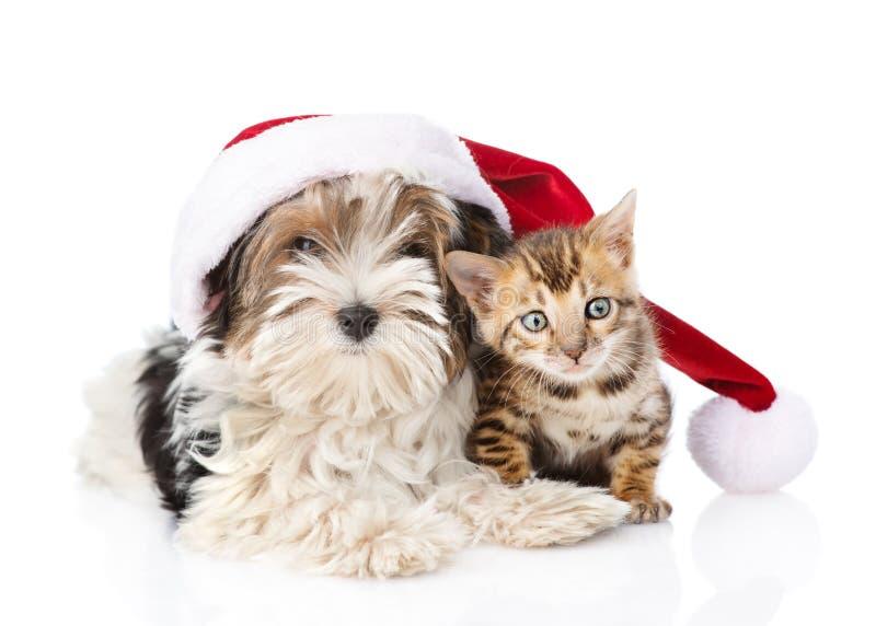 Gatto del Bengala e cucciolo del terrier di Biewer-Yorkshire con il cappello rosso di Santa Isolato su bianco fotografie stock