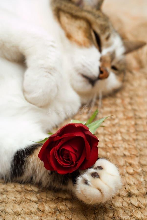 Gatto del biglietto di S. Valentino fotografie stock