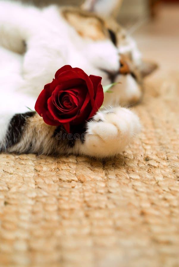 Gatto del biglietto di S. Valentino immagini stock libere da diritti
