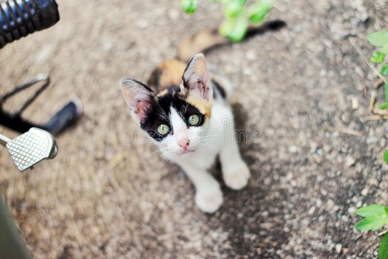 gatto del cutie fotografia stock