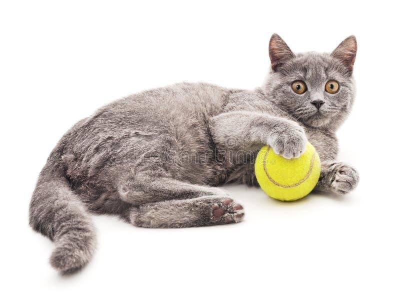 Gatto del Dray con la palla fotografia stock