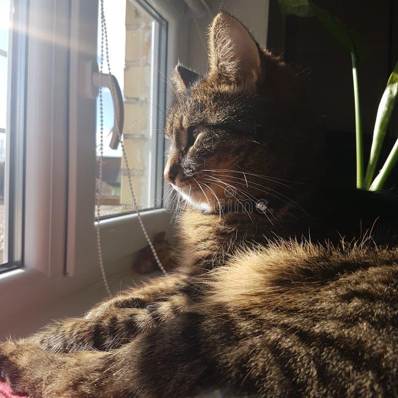 Gatto del gattino del bambino oh immagine stock libera da diritti