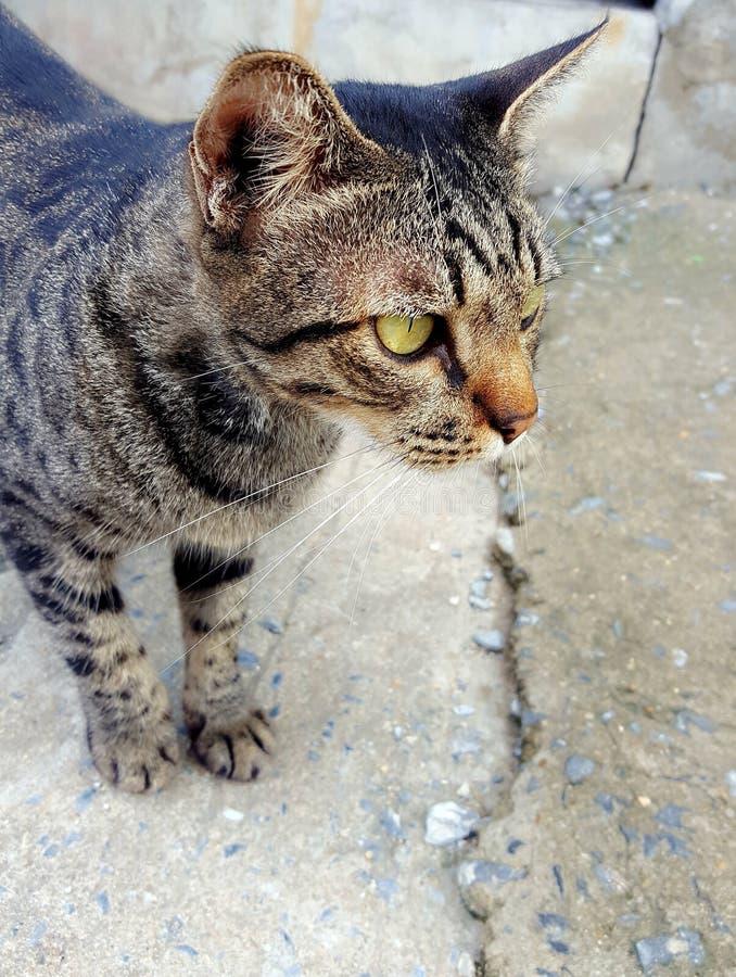 gatto del gatto fotografia stock