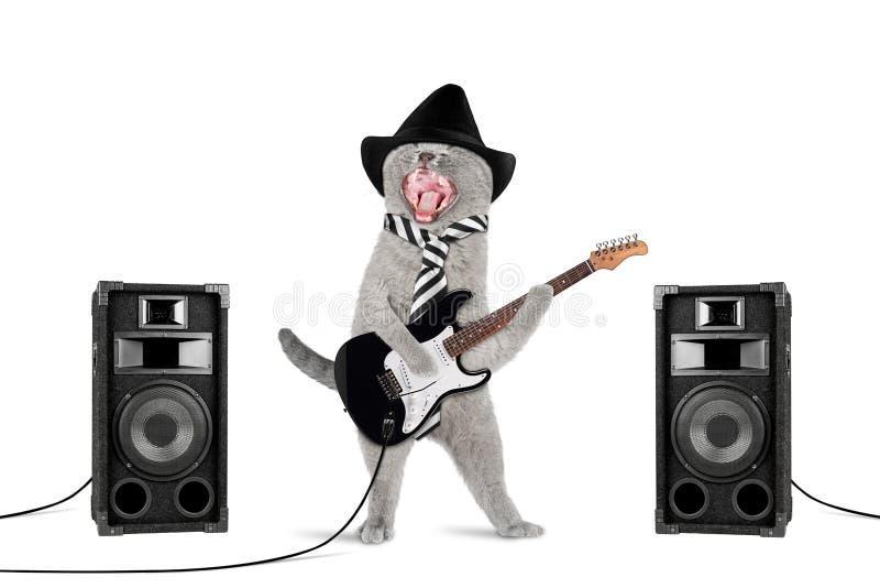 Gatto del rock star immagine stock