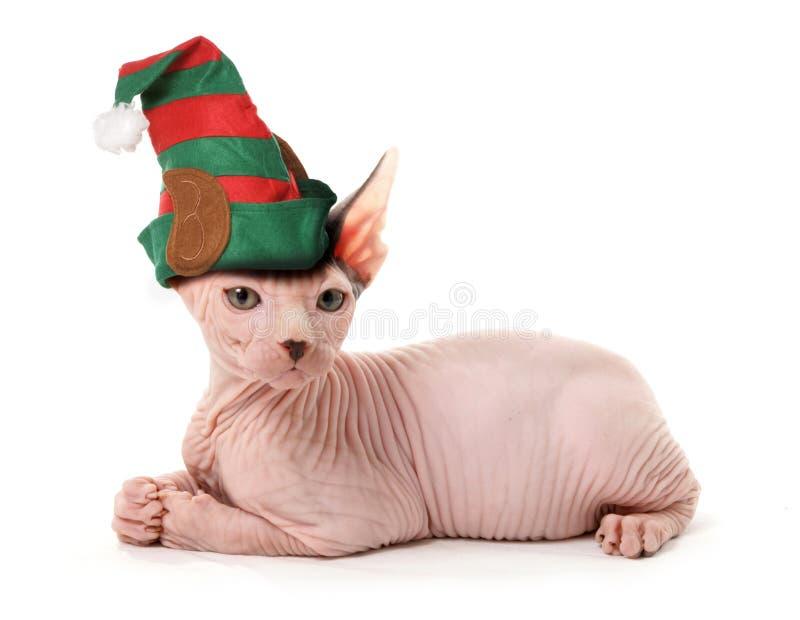 Gatto dell'elfo della Sfinge immagini stock