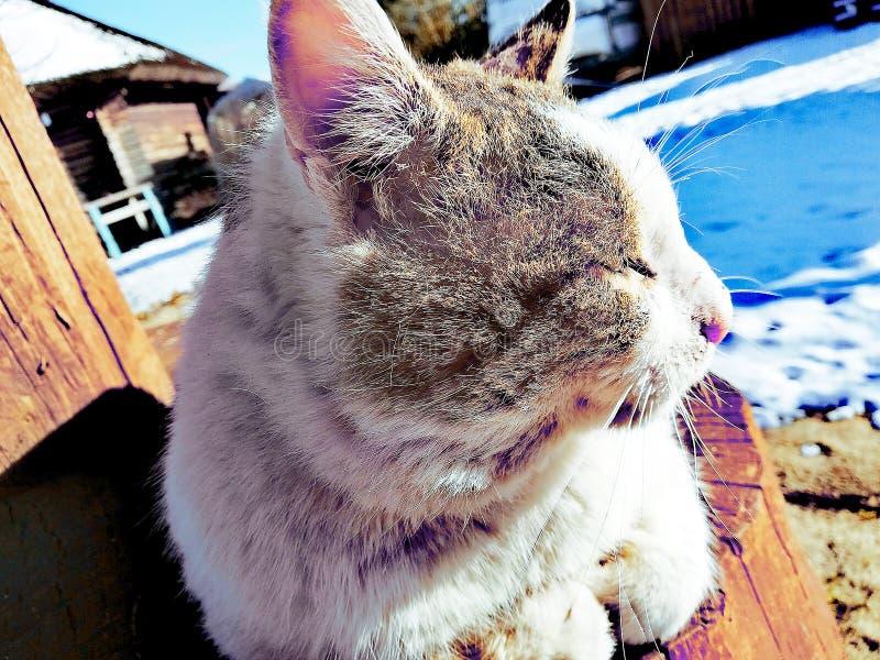 Gatto dell'iarda che riposa sulla via, prendente il sole al sole fotografie stock