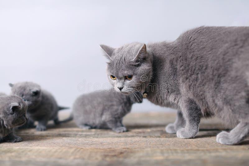 Gatto della madre che prende cura del suo bambino fotografia stock