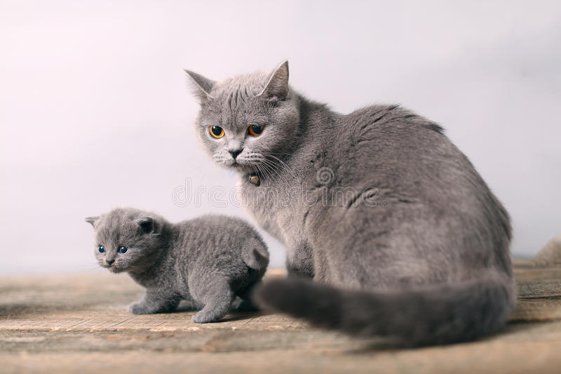 Gatto della madre che prende cura del suo bambino fotografia stock libera da diritti