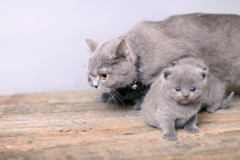 Gatto della madre che prende cura del suo bambino immagine stock libera da diritti