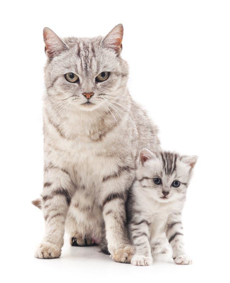 Gatto della mamma con il gattino immagine stock libera da diritti