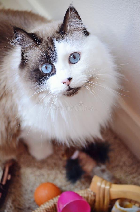 gatto della Straccio-bambola immagine stock