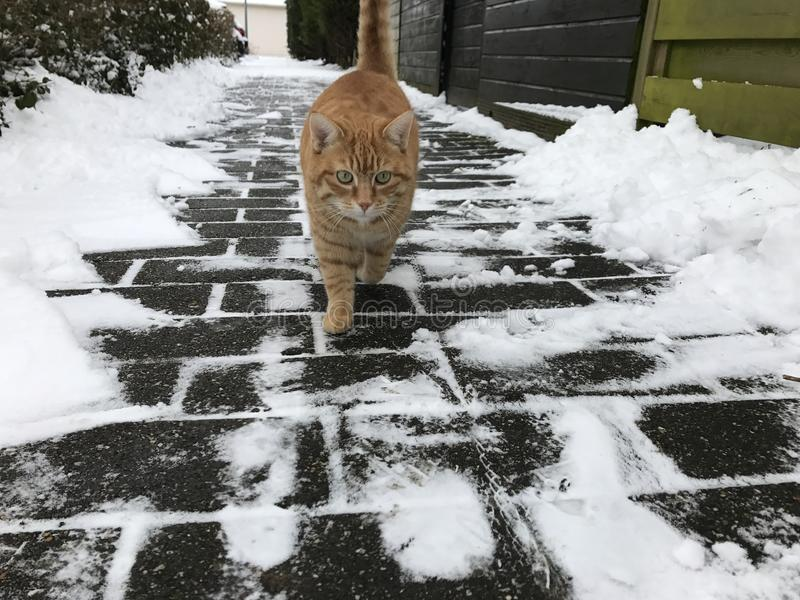 Gatto delle nevi fotografia stock