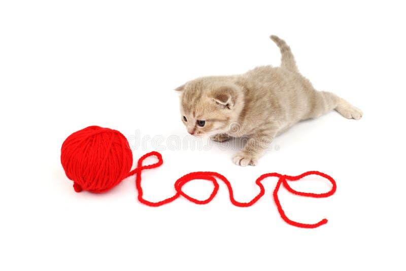 Gatto di amore immagine stock libera da diritti